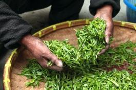 tea-farmhouse-hand-fresh-39347