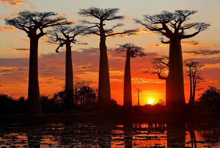 allee_des_baobabs_voyage_madagascar_ouest1